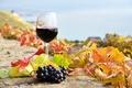 Картинка осень, листья, вино, красное, бокал, виноград, виноградники