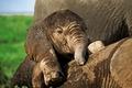 Картинка Africa, Baby Elephant, Elephant, WWF