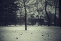 Картинка деревья, ветки, зима, снег, дом
