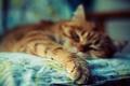 Картинка кот, цвета, фото, фон, обои, яркие, лапы, размытость, рыжий
