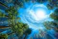 Картинка лес, небо, деревья, рисунок, зеленые