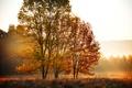 Картинка утро, оранжевые, природа, деревья, листья, поле, желтые, осень, лес