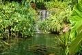 Картинка сад, водопад, кусты, Botanic Gardens, листья, зелень, Сингапур, трава, пруд