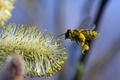 Картинка цветок, полет, пчела