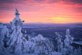 Картинка зима, лес, небо, снег, закат, Финляндия, Лапландия, январь, Sampsa Wesslin рhotography