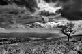Картинка Облака, дерево, черно-белая