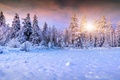 Картинка зима, солнце, снег, елки, landscape, winter, snow