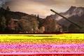 Картинка Wot, world of tanks, мир танков, object 261