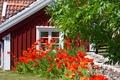 Картинка лето, цветы, маки