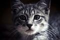 Картинка животные, глаза, Кошки