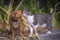 Картинка собака, кошка, последние новости, на ушко