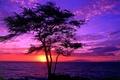 Картинка Гавайи, дерево, закат