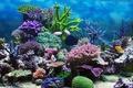 Картинка подводный мир, underwater, ocean, fishes, tropical, reef, coral, коралловый риф