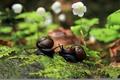 Картинка цветы, макро, улитки, подружки, листья