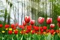Картинка красота, Spring tulips, жёлтые, красные, весна, тюльпаны