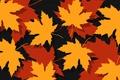 Картинка осень, листья, autumn, foliage