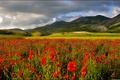 Картинка маки, долина, поле, горы