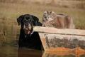 Картинка собака, взгляд, друзья, кошка