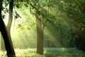 Картинка лучи, forest, природа, деревья, sunshine, Green trees, солнце, лес