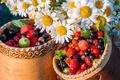 Картинка ягоды, ромашки, цветы, туески