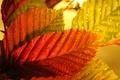 Картинка осень, листья, макро, цвет