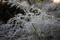 Картинка иней, трава, природа, утро, заморозки