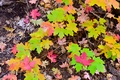 Картинка макро, осень, листья