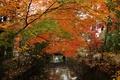 Картинка осень, деревья, мост, парк, канал