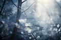 Картинка деревья, свет, лес, природа