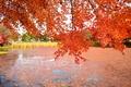 Картинка пруд, деревья, озеро, осень, листья