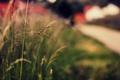 Картинка зелень, трава, макро, природа, фон, widescreen, обои, растение, размытие, колоски, wallpaper, колосья, nature, широкоформатные, background, ...