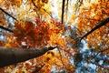 Картинка forest, природа, деревья, leaves, nature, autumn, листья, trees, 2560x1600, лес, небо, sky, осень, пейзаж, landscape