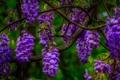 Картинка цветы, макро, ветка, соцветие