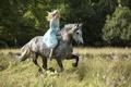 Картинка cinema, grass, Disney, flower, dress, trees, bushes, movie, woods, animal, horse, blonde, film, princess, Cinderella, ...
