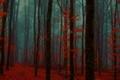 Картинка туман, осень, лес
