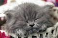 Картинка милый, котенок, спит