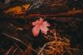 Картинка лес, осень, трава, лист, хвоя