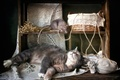 Картинка кошка, корзина, крыса, кошки мышки