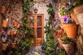 Картинка flowers, jars, house, door