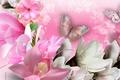 Картинка бабочка, коллаж, лепестки, орхидеи, цветы