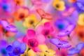 Картинка цветы, цвета, яркость