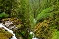 Картинка зелень, лес, деревья, ручей, камни, водопад, мох