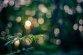 Картинка макро, ветка, свет, природа, листья, боке, веточка, вечер