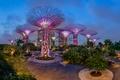 Картинка пальмы, парк, сад, деревья, Gardens by the Bay, огни, ночь, Сингапур, дизайн