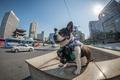 Картинка Official Seoul Phodographer, Boston terrier, Korea