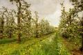 Картинка лето, стиль, сад, деревья, природа