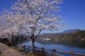 Картинка Япония, река, весна, сакура