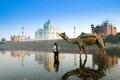 Картинка Индия, Тадж-Махал, верблюд