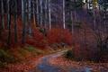 Картинка красные, дорога, деревья, осень, лес, листья