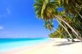Картинка песок, небо, пальмы, берег, побережье